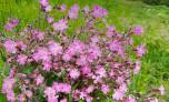 Reservoir Flowers